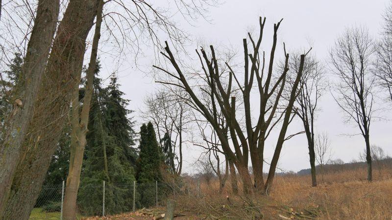 drzewa5